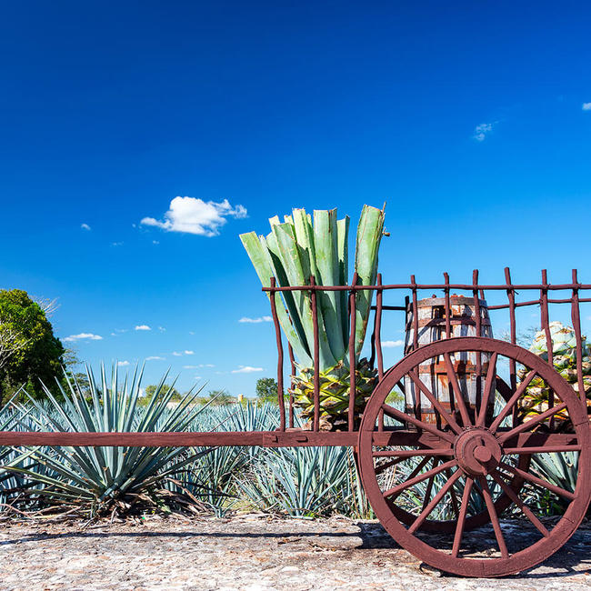 Mexico agave cart scene